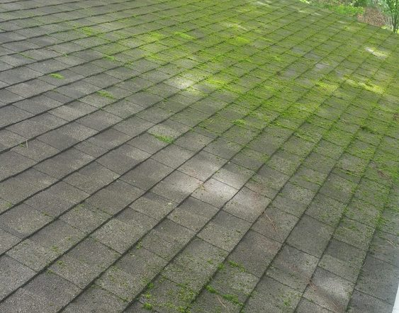 Stop moss-How to wash a roof-Moss and mold remover