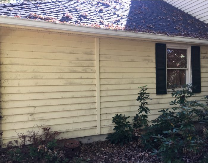 moss and mold removal on house