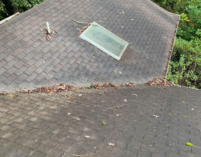 ProClean Roof Cleaning-mold-mildw on roof