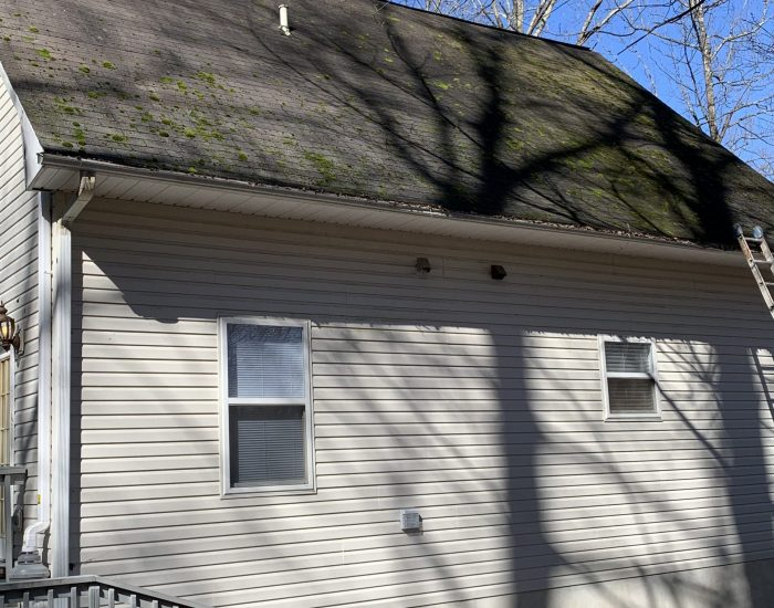 moss removal on roof in Hendersonville-low pressure washing