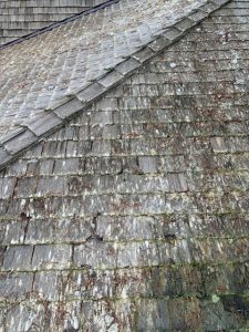 moss on cedar shake shingles before roof cleaning