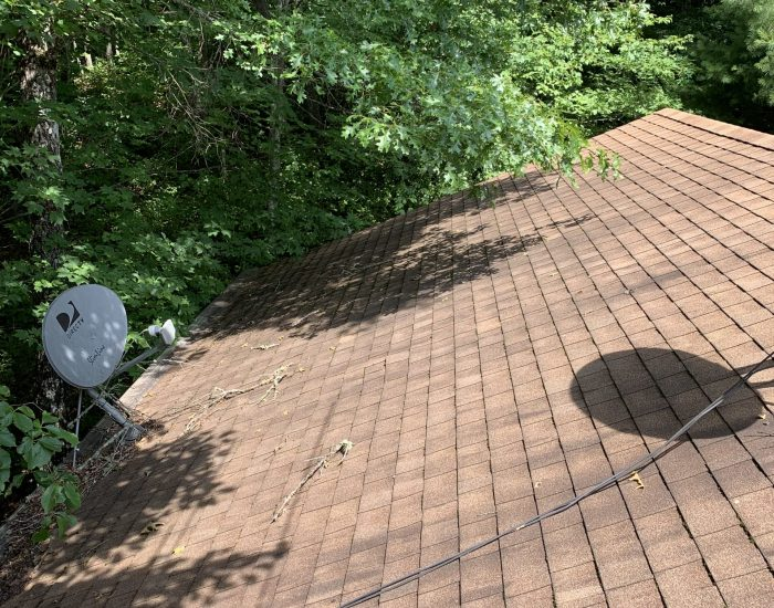 mold on roof shingles